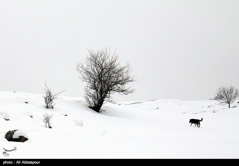 http://newsmedia.tasnimnews.com/Tasnim//Uploaded/Image/1393/11/28/13931128123244214766474.jpg