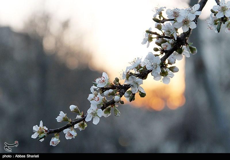 http://newsmedia.tasnimnews.com/Tasnim//Uploaded/Image/1393/12/23/139312231144556974918064.jpg