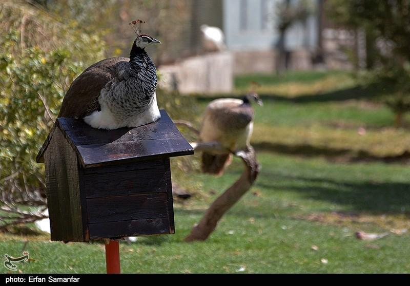 http://newsmedia.tasnimnews.com/Tasnim//Uploaded/Image/1393/12/27/139312271137231704945544.jpg