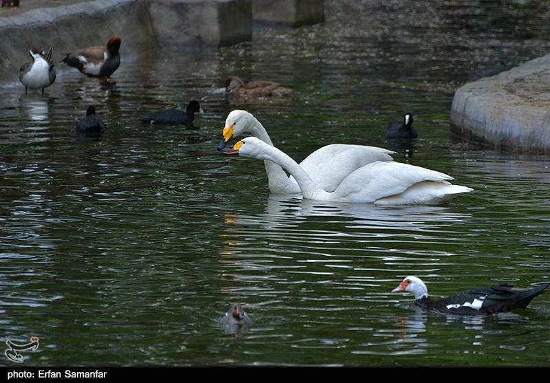 http://newsmedia.tasnimnews.com/Tasnim//Uploaded/Image/1393/12/27/139312271137244804945544.jpg