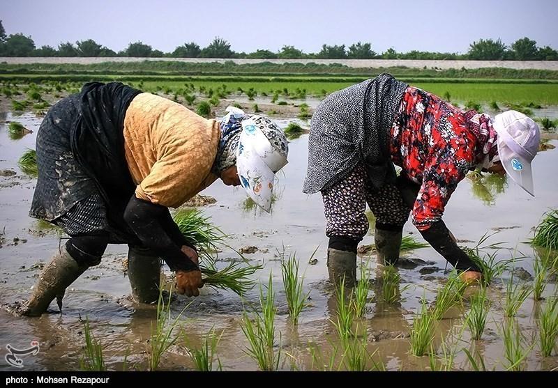 http://newsmedia.tasnimnews.com/Tasnim//Uploaded/Image/139302161555312082694794.jpg