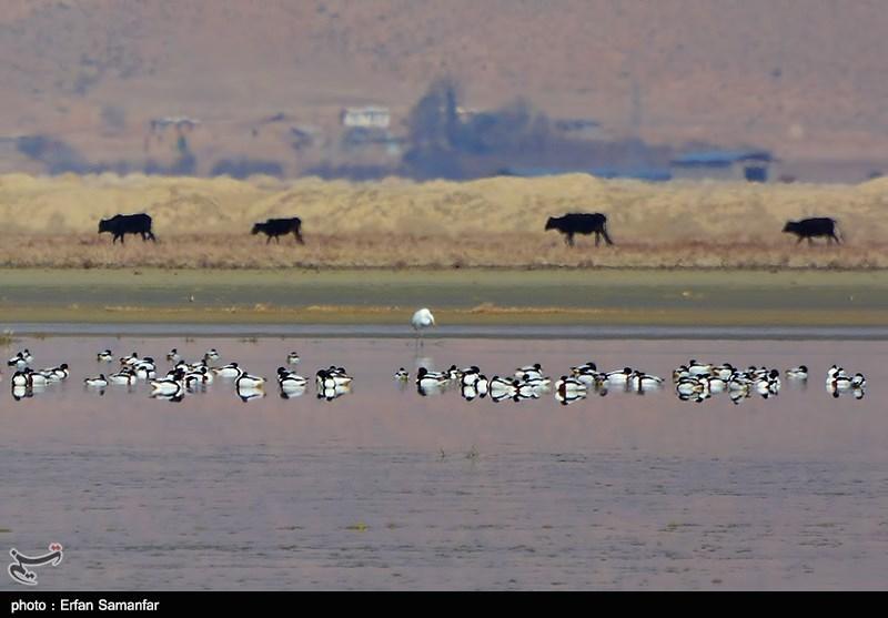 http://newsmedia.tasnimnews.com/Tasnim//Uploaded/Image/1394/05/05/139405051531453125764744.jpg