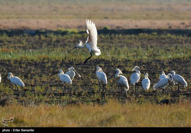 http://newsmedia.tasnimnews.com/Tasnim//Uploaded/Image/1394/05/05/139405051531458735764744.jpg