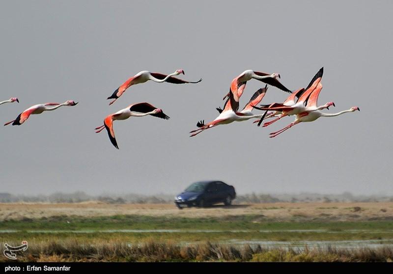 http://newsmedia.tasnimnews.com/Tasnim//Uploaded/Image/1394/05/05/13940505153146765764744.jpg