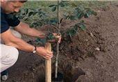 توزیع 50 تن کود کمپوست برای درختکاری در کرمان