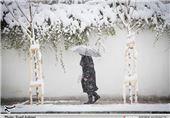 بارش برف، چهره شهرضا را زمستانی کرد