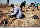 کاشت 5 هزار اصله نهال در ارتفاعات فنایی خوی
