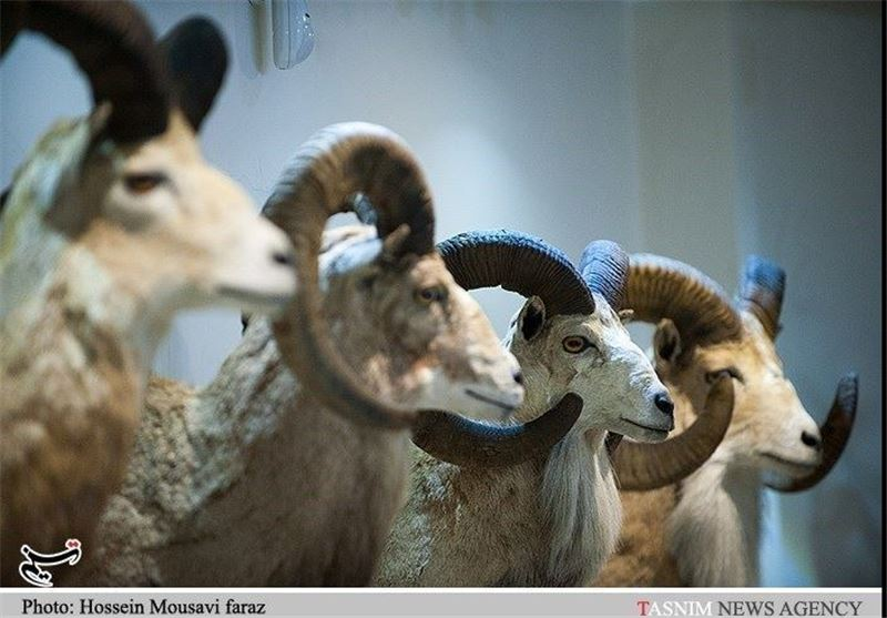 Iran Darabad Museum of Nature, Wildlife - Tourism news
