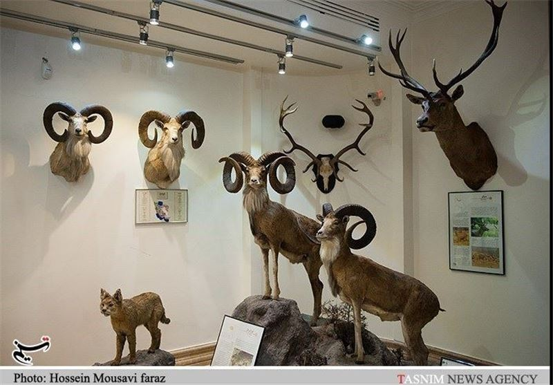 Iran Darabad Museum of Nature, Wildlife - Tourism news