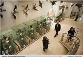 Iran Darabad Museum of Nature, Wildlife