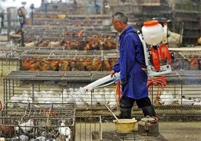 آنفولانزای مرغی