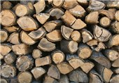 65 متر مکعب چوب قاچاق در غرب مازندران کشف شد