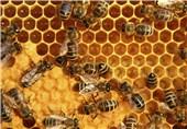 کندو زنبور عسل