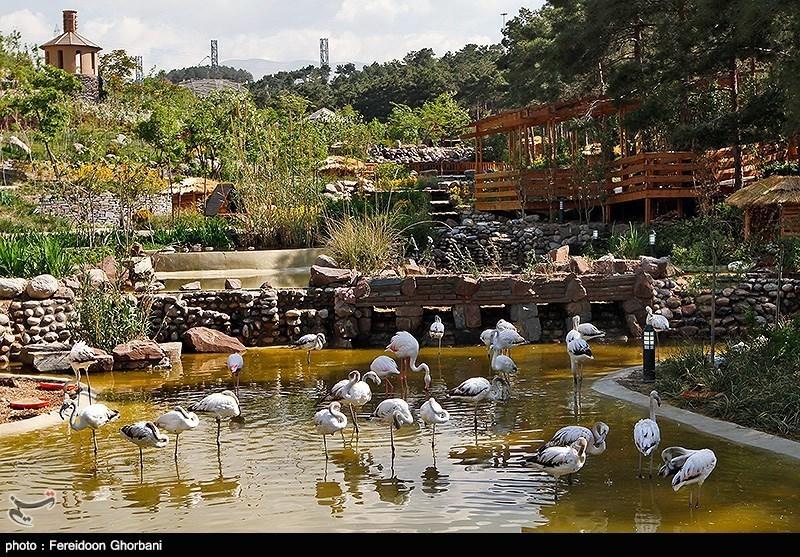 کانال بوشهر خبرگزاری تسنیم - باغ پرندگان تهران
