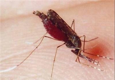 """کاشت """"کهور"""" میتواند عامل بازگشت مالاریا به کشور باشد"""