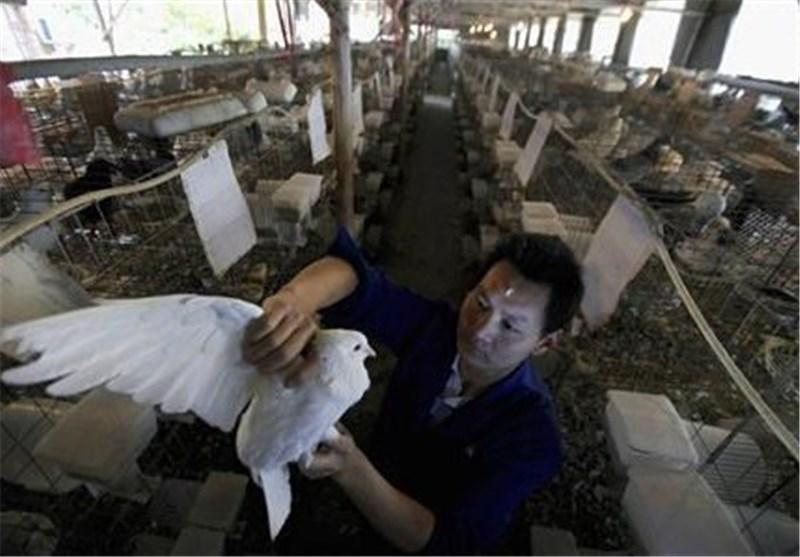 آنفولانزای مرغی در شرق چین همچنان قربانی میگیرد