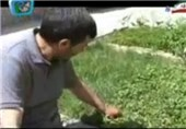 عملکرد مزارع آذربایجانغربی در صورت مبارزه با علفهای هرز افزایش 30 درصدی یافت