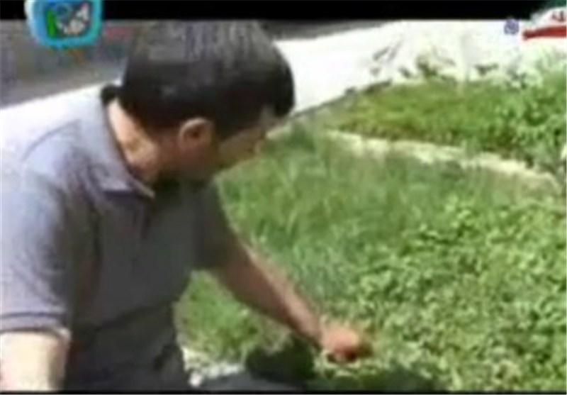 مبارزه با علفهای هرز در 166 هزار هکتار از مزارع غلات آذربایجان غربی