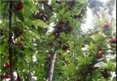 هشدارهای هواشناسی به کشاورزان برای 4 روز آینده