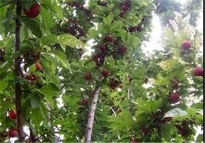 «میامی» شهرستانی که با وجود تولید نیمی از غلات استان سمنان کمتر توسعهیافته است