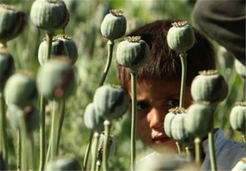 "Commander Views Afghan Drug Production as ""Global Threat"""