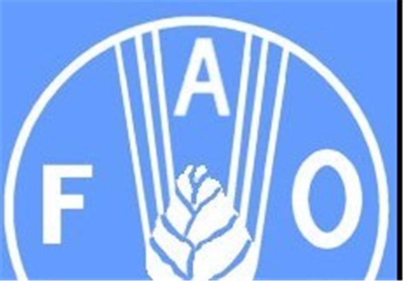 فائو: ایران در مرز خودکفایی تولید گوشت قرار دارد