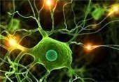سلول مغز