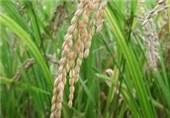آغاز نهضت علمی تولید کشاورزی در مازندران/ ضرورت شناسنامه دار کردن محصولات