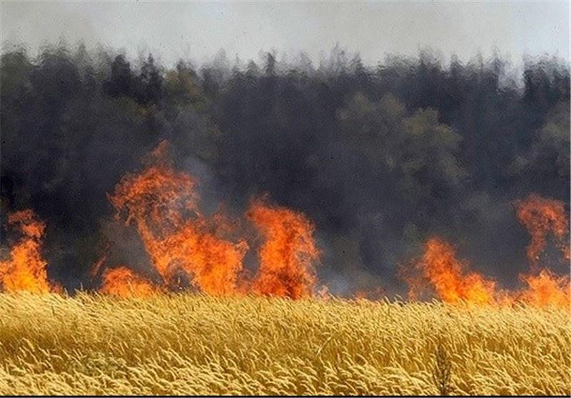 بیش از 200 هکتار باغات دیم استهبان در حال سوختن است