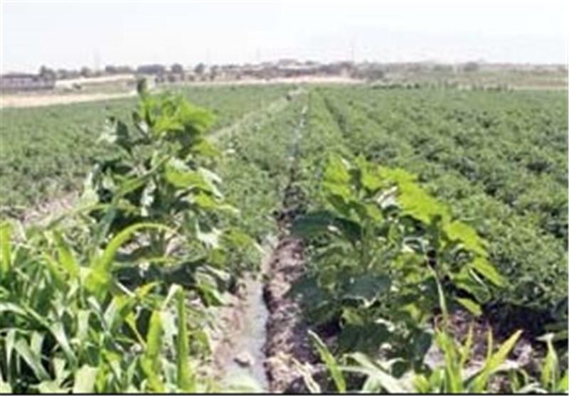 تولید 91000 تن سبزی و صیفی پائیزه در قائم شهر