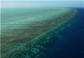 آلودگیهای نفتی؛ متهم ردیف اول مرگ تدریجی مرجانهای خلیج فارس