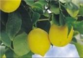 اجرای طرح کاشت درختان میوه در منازل/ راه اندازی نهضت توسعه پایدار در مازندران