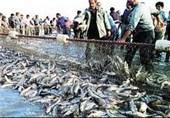 خطر جدی انقراض در کمین ماهیهای سفید و خاویاری ایران