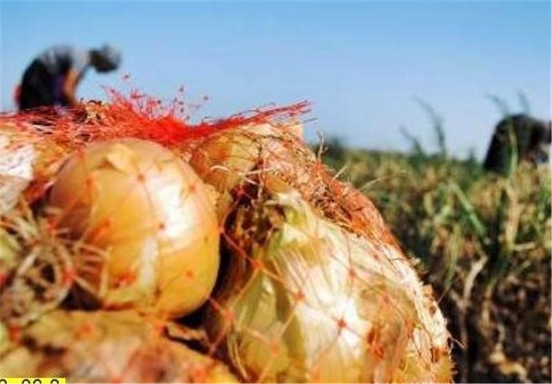 سهم اندک کشاورزان جنوب کرمان از درآمد محصولات کشاورزی
