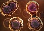 تجهیزات آزمایشگاهی به کمک تولید فرآوردههای سلولی و زیستی میآیند