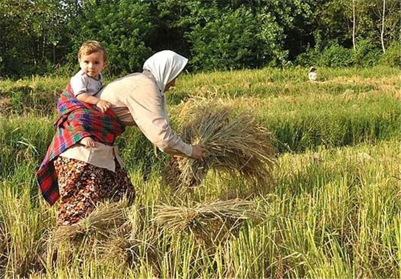 علیزاده شایق: اقتصاد مقاومتی در وزارت جهاد کشاورزی در 3 اقدام مهم خلاصه میشود