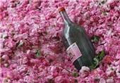 نخستین کنفرانس بین المللی گل محمدی در قمصر کاشان آغاز شد