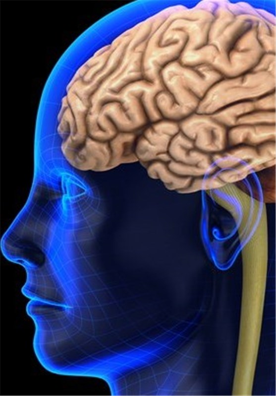 Childhood Concussions Impair Brain >> Childhood Concussions Impair Brain Function Science News Tasnim