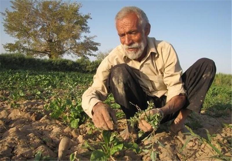 کشاورزان فقیرتر شدند/سود گرانیها به دلالان رسید