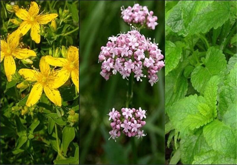 جمعآوری و شناسایی 325 داروی گیاهی در آذربایجان شرقی