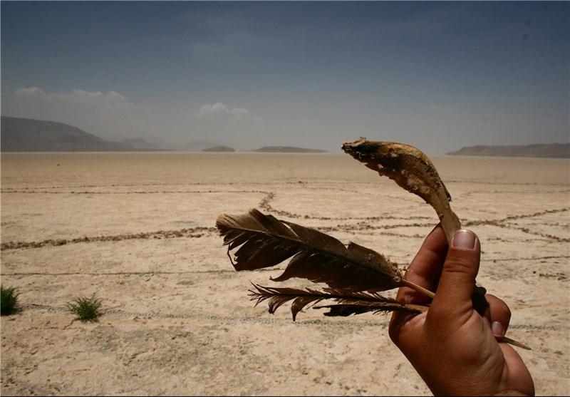 دریاچه بختبرگشته بختگان جان داد/ فلامینگوهایی که جان به خشکی دادند + عکس