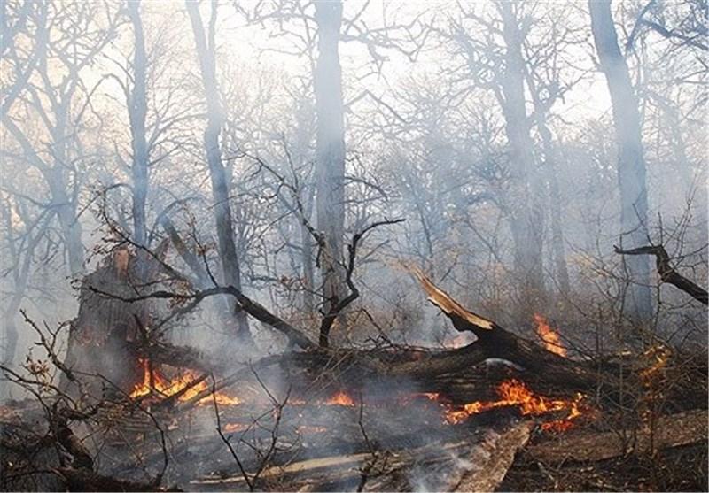 2600 مترمربع از جنگلهای گالیکش در آتش سوخت
