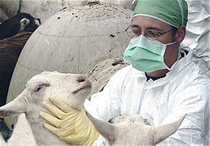اقدامات برای مهار بیماری تب مالت در استان همدان کافی نبوده است