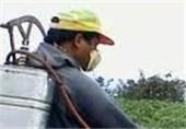 فروش سموم کشاورزی در استان البرز نظاممند میشود