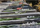 مزار شهدای تایله سنندج تا پایان امسال ساماندهی میشود