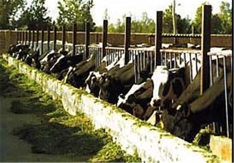 صدور 437 فقره پروانه بهره برداری دامپروری در مازندران