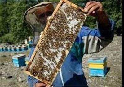 علت عدم حمایت از زنبورداران آذربایجانغربی در زمینه صادرات با حضور وزیر جهاد کشاورزی بررسی شد