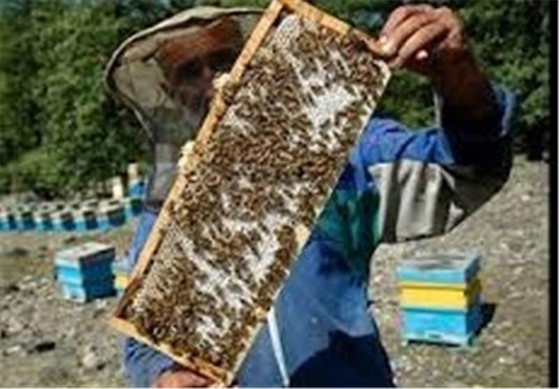 عسل نهاوند نیازمند بستهبندی و برندسازی است