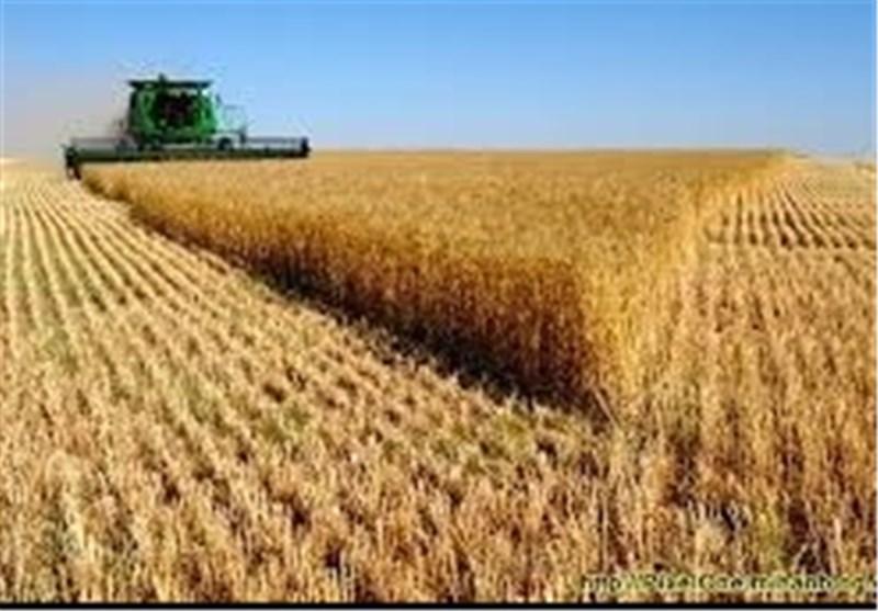 توزیع 70 تن بذر گندم اصلاحی در بین کشاورزان نرماشیر