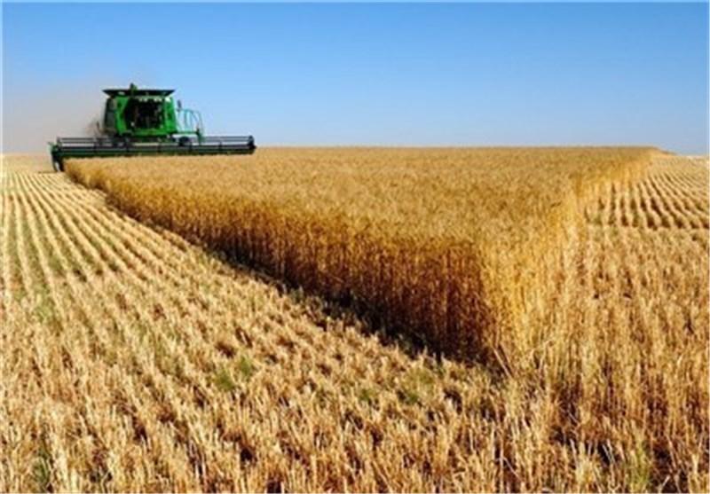 80 درصد جمعیت روستایی و عشایری کرمانشاه زیر پوشش بیمه کشاورزی قرار دارند